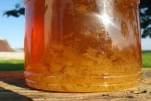 Μεγάλη Προσοχή: Τι σημαίνει όταν κρυσταλλώνει το μέλι;