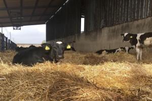 7 βασικοί μύθοι που συνοδεύουν το αγελαδινό γάλα!