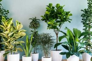 Μη βάλετε ποτέ στο σπίτι σας αυτά τα 7 φυτά - Η εφαρμογή που ανιχνεύει τις αρρώστιες τους