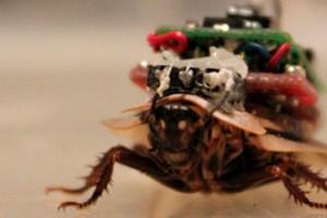 Κατσαρίδες «cyborg» θα σώζουν στο μέλλον... ζωές – Δείτε πώς θα μπορούσαν να γίνουν μέλη της ΕΜΑΚ!