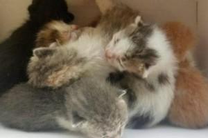 Λαμία: Οδηγός απορριμματοφόρου έσωσε νεογέννητα γατάκια