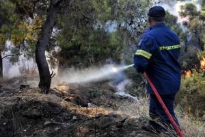 Βόνιτσα: Ο αέρας κάνει δύσκολη την κατάσβεση της φωτιάς - Επιχειρεί το Beriev-200
