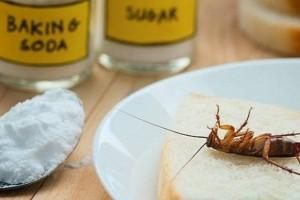 6 τρόποι να εξαφανίσεις τις κατσαρίδες από το σπίτι σου - Το τρομερό κόλπο με την μαγειρική σόδα