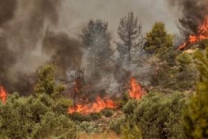 Μαγνησία: Φωτιά στο δήμο Αλμυρού - Ευτυχώς δεν κινδυνεύουν κατοικημένες περιοχές