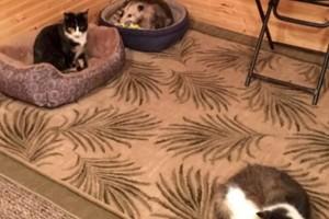 Γιαγιά νόμιζε ότι φροντίζει 3 γάτες μέχρι που ο εγγονός είδε ότι η τρίτη είχε κάτι το περίεργο!