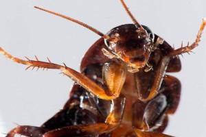 8 φυσικοί τρόποι για να εξαφανίσεις τις κατσαρίδες από το σπίτι!