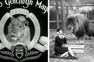 Η ιστορία της Φάρμας όπου έζησαν 500 λιοντάρια που εμφανίστηκαν σε ταινίες του Hollywood