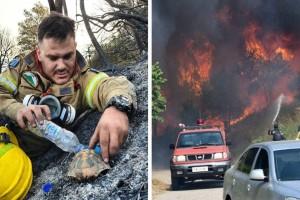 Η φωτογραφία του πυροσβέστη που έγινε viral: Δίνει νερό σε χελώνα για να επιζήσει!