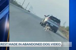 Θλίψη και οργή προκαλεί βίντεο με σκύλο που εγκαταλείπεται στην άκρη του δρόμου!