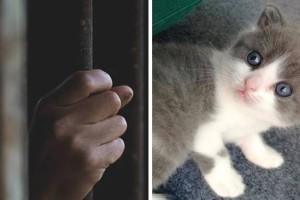 Απόφαση σταθμός: Πρώτη προφυλάκιση στην Ελλάδα για ζωοκτονία! Στην φυλακή 23χρονος που σκότωσε γάτα