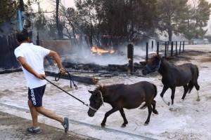 Φωτιά στη Βαρυμπόμπη: Κάηκαν ζωντανά τα άλογα - Δεν κατάφεραν να σωθούν όλα