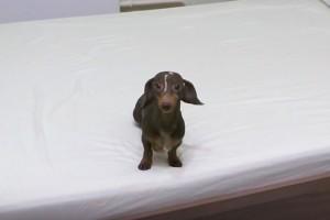 Έδωσε εντολή στον σκύλο του να μην ανέβει στο κρεβάτι - Αυτό που κατέγραψε η κάμερα θα σας κάνει να ξεκαρδιστείτε! (Video)