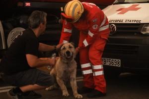 Φωτιά Βαρυμπόμπη: Συγκινούν οι προσπάθειες πυροσβεστών και κατοίκων να σώσουν τα ζωάκια
