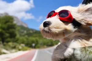 Τρία σκυλιά στον κτηνίατρο: Το ανέκδοτο της ημέρας (23/9)