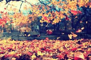 Η φωτογραφία της ημέρας: Σε φθινοπωρινούς ρυθμούς!