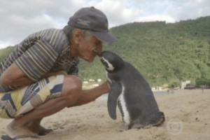 Απίστευτο! Πιγκουίνος κολυμπά 8.000 χιλιόμετρα κάθε χρόνο για να αγκαλιάσει τον ψαρά που του έσωσε τη ζωή!