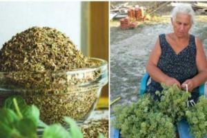 Ρίγανη: Το ελληνικό βότανο με τις μοναδικές ιδιότητες – Φούσκωμα, πονοκέφαλος, πόνοι Περιόδου