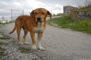 Σοκ στις Σέρρες: Έδεσε σκύλο σε αυτοκίνητο και άρχισε να τον σέρνει