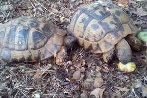 Τράκαραν δυο χελώνες... Το ανέκδοτο της ημέρας (23/10)