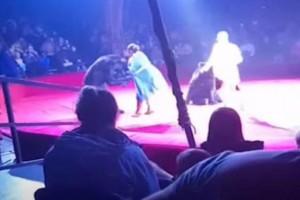 Τρόμος! Αρκούδα επιτέθηκε σε έγκυο θηριοδαμαστή σε τσίρκο (Video)
