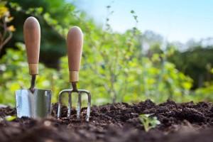 Οι χρήσεις της κανέλας στην κηπουρική θα σου λύσει τα χέρια!