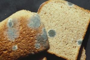 Μούχλιασε το ψωμί στο ψυγείο; Αν κόψεις μόνο το χαλασμένο σημείο τότε θα...
