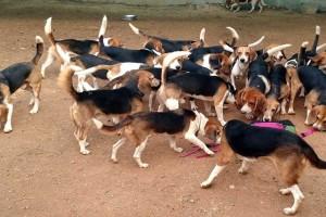 156 σκύλοι ήταν κλεισμένοι στο κλουβιά τους για καιρό - Μόλις τους έβγαλαν έγινε το απίστευτο