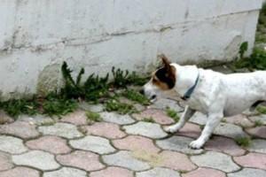 Είδε τον σκύλο της να μυρίζει ένα λουκάνικο στην αυλή. Μόλις όμως το πρόσεξε λίγο καλύτερα, πάγωσε…