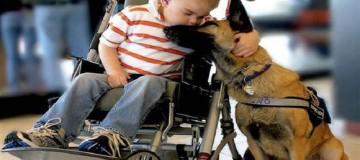 """Μια συγκινητική ιστορία αγάπης """"Το ανάπηρο παιδί και ο σκύλος του""""!"""