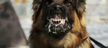 Φρίκη: Αδέσποτα σκυλιά κατασπάραξαν 12χρονη που γυρνούσε από το σχολείο!