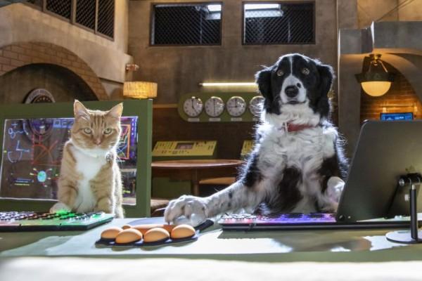 Σαν Το Σκύλο Με τη Γάτα