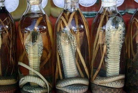 Κρασί από φίδι και ποντίκια;;Και όμως υπάρχουν