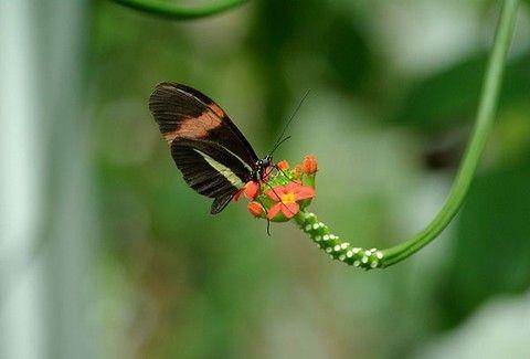 Ένας ζωολογικός κήπος μόνο για πεταλούδες!(PHOTOS)