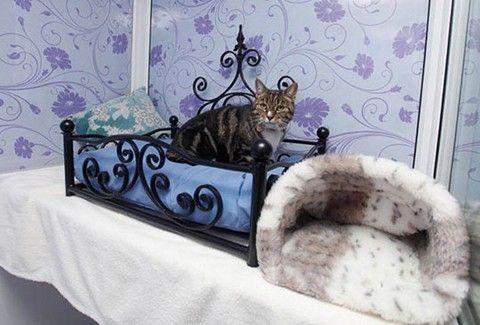 Ένα πολυτελές ξενοδοχείο πέντε αστέρων αποκλειστικά για γάτες!!