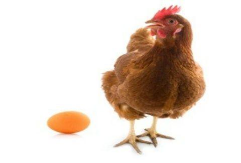 H κότα έκανε το αβγό ή το αβγό την κότα;ΒΡΕΘΗΚΕ η απάντηση επιτέλους!