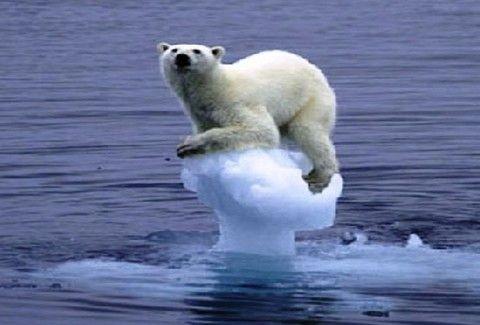 Δείτε την αρκούδα που προσπαθεί να εμποδίσει την ανθρώπινη επέμβαση στο φυσικό της περιβάλλον!