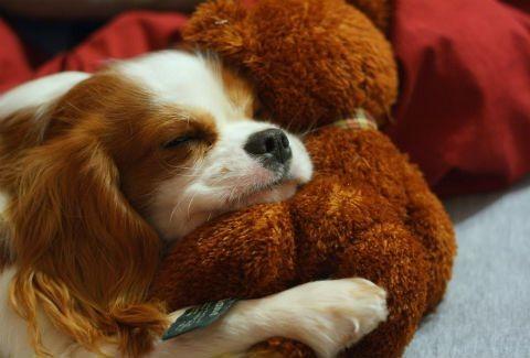 Εσύ,(ναι εσύ!)κοιμάσαι ακόμα με το αρκουδάκι σου;