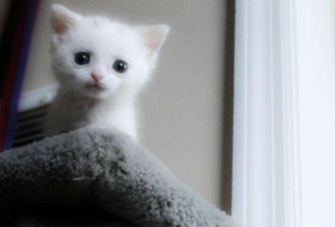 ΔΕΙΤΕ γιατί αυτό το μικρό γατάκι κάνει θραύση στο Internet!(PHOTOS)