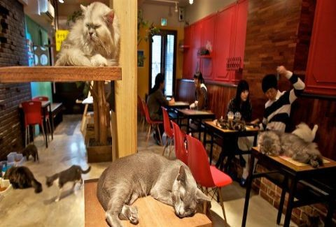 Οι καφετέριες για γάτες έχουν προβλήματα με το νόμο!