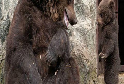 Μαμά μαλώνει το αρκουδάκι της και στη συνέχεια το αγκαλιάζει! (PHOTOS)