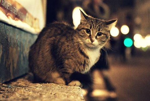 ΣΥΓΚΙΝΗΤΙΚΟ ΒΙΝΤΕΟ:Μια αδέσποτη γάτα προσπαθεί να επαναφέρει στη ζωή τη...