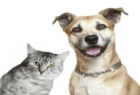 Ο πιο γλυκός... καυγάς μεταξύ σκύλου και γάτας!(VIDEO)