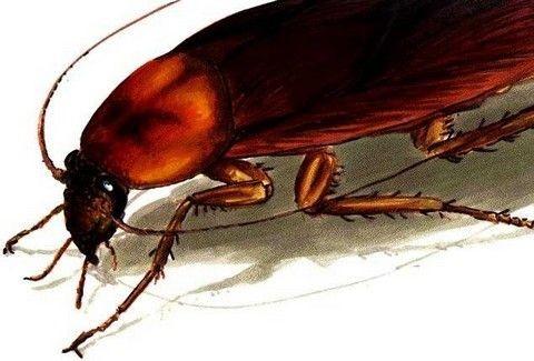 Πώς να εξαφανίσετε με φυσικό τρόπο... τις κατσαρίδες!