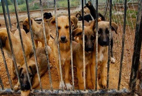 ΣΟΚΑΡΙΣΤΙΚΟ! Αυτό είναι το ντοκιμαντέρ για το εμπόριο κρέατος σκύλων που ΠΡΕΠΕΙ ΝΑ ΔΕΙΤΕ!!! (VIDEO)