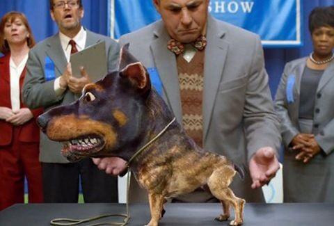 Ντοπερουάουα: Η νέα ράτσα σκύλου που σκορπάει τον ΤΡΟΜΟ παντού...! (VIDEO)