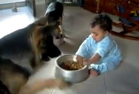 Κόντρα μωρού με σκύλο για το φαγητό!!! Δείτε το ΑΠΙΘΑΝΟ video που κάνει τον γύρο του διαδικτύου...!