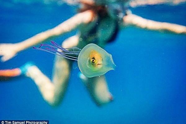 Η Φωτογραφία της Ημέρας: To... τεμπέλικο ψαράκι που χρησιμοποιεί