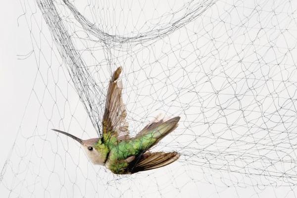 Αφρικανική μεγάλο πουλί σκατά