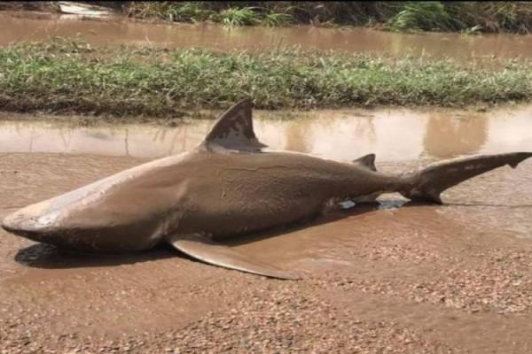 Εκεί που περπατούσαν στον δρόμο, ξάφνου βλέπουν έναν... καρχαρία μπροστά τους (photo+video)