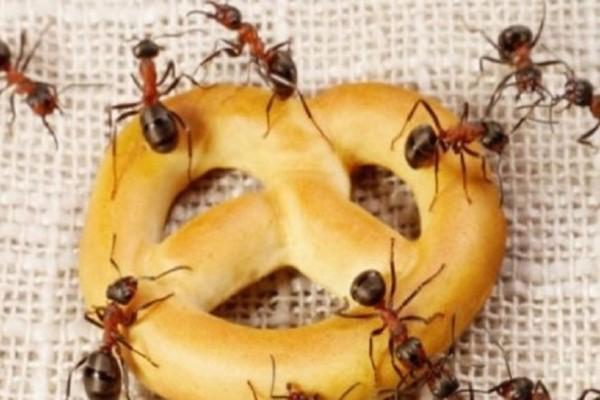 Τέλος στον εφιάλτη: Έτσι θα εξαφανίσεις τα μυρμήγκια από την κουζίνα!